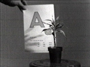 teaching a plant the alphabet_john baldessari